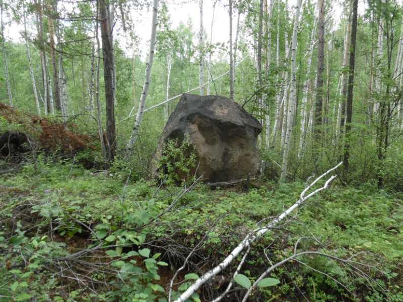 грибы и поход в лес камень