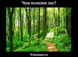 чем полезен лес и растения леса для человека