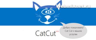 Как я делал заработок в интернете на коте