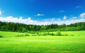 лес возле поля