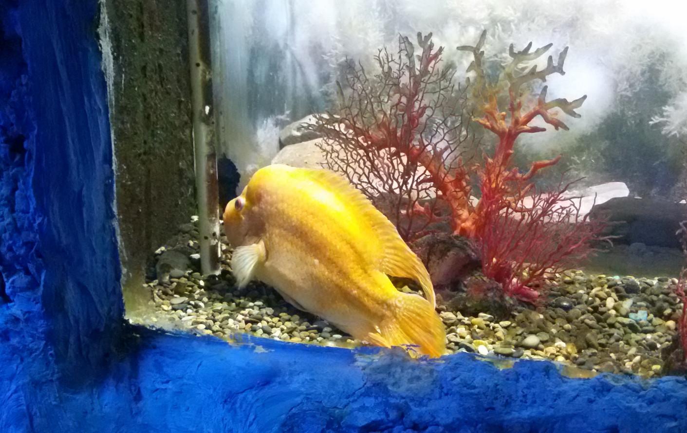 рыба счастья